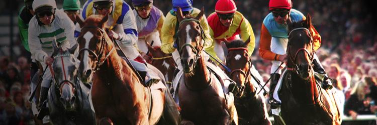 Pferderennen go